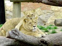 Jardim Zoológico de Lisboa propõe apadrinhar um animal
