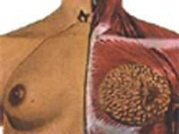 Homens também são alvo do câncer de mama