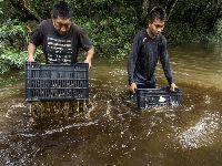 Wapichana e Wai Wai compartilham boas práticas no manejo da castanha em Roraima. 32005.jpeg
