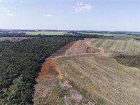 Desmatamento ilegal avança no Mato Grosso e pressiona Território Indígena do Xingu. 33017.jpeg