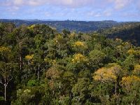 Ambientalistas pedem que Congresso rejeite nova proposta de Temer que reduz floresta no Pará. 27018.jpeg