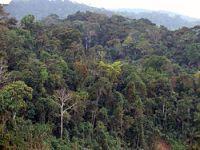 Conselho Nacional do Partido Ecologista