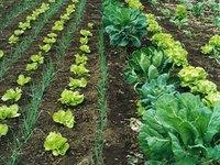 Brasil: Diminui produção agrícola