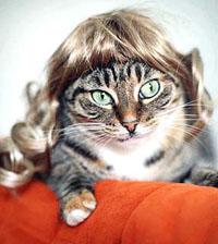Site vende perucas para gatas (foto)