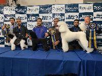 Campeões mundiais participam, em Salvador, de evento para os pets. 32025.jpeg
