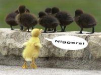 Nenhum Estado está imune ao racismo