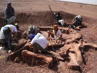 Sobre a Descoberta de um Novo Dinossáurio Proveniente de África