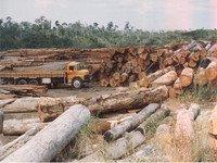 Brasil: Governo combate desmatamento