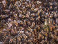 Biodiversidade, a nossa única opção. 31049.jpeg