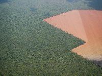 Ministério Público, ambientalistas e produtores rurais são contra relatório da MP 867. 31050.jpeg