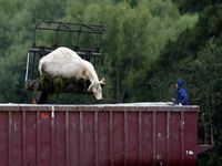 Mapa e UE discutem aftosa e controle da carne