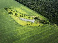 Direto do confinamento: Nem com a pandemia o desmatamento vai cair. 33057.jpeg