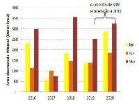 Direto do confinamento: Nem com a pandemia o desmatamento vai cair. 33058.jpeg