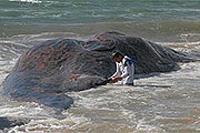 Bombeiros recomendam banhistas evitarem a entrar na água onde a baleia encalhou