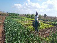 Oikos vai apoiar agricultores, pescadores e negócios locais afetados pela COVID-19 em Moçambique. 34079.jpeg