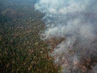 Araribóia sofre com violência, invasões e desmatamento. 32080.jpeg