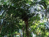 Os Verdes exigem esclarecimentos sobre o abate e transplante de árvores junto à Torre de Picoas. 28083.jpeg