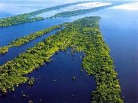 Em defesa da Amazónia