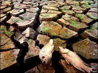 Muralha Verde contra a Desertificação