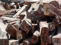 Guiné-Bissau: Sociedade civil denuncia corte e venda ilegal de madeira. 28110.jpeg