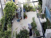 Projeto documenta a agro-resistência na Palestina contra ocupação e colonização israelense. 30113.jpeg