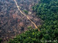 Desmatamento em Terras Indígenas cresce 124%, mas segue concentrado em áreas críticas. 30116.jpeg