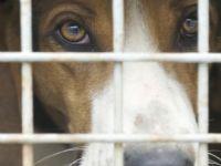 Cães serão poupados de testes de intoxicação por agrotóxicos no Brasil. 23121.jpeg