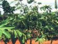 Diversidade de plantas oferece vantagens