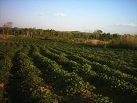 Brasil defende produção de bioenergia com desenvolvimento rural