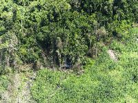 Grandes empreendimentos provocam boom de desmatamento na Volta Grande do Xingu. 30129.jpeg