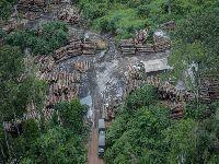 Maioria das áreas protegidas na Amazônia está sob pressão. 31129.jpeg