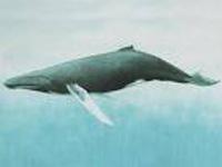 Baleias do Brasil
