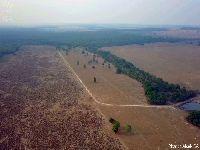 Ao menos 13 milhões de árvores foram derrubadas ilegalmente no Xingu em dois meses. 31130.jpeg