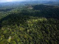 Proteção do clima está sendo esvaziada na Amazônia. 31135.jpeg