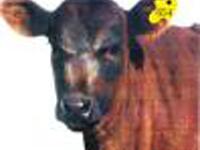 Angola: Argentina investe no sector agrícola