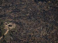 Efeito Bolsonaro promove maior aumento anual do desmatamento neste século. 32141.jpeg
