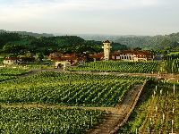 Sul do Brasil é protagonista na rota do vinho no País. 25148.jpeg
