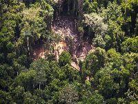 95% do desmatamento dos últimos três meses ocorreu sem autorização, aponta MapBiomas Alerta. 31148.jpeg