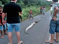 Miguel salvou garota atacada por cobra de 9 metros