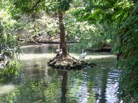 Estudo sobre emissões na Amazônia será apresentado no lançamento do Painel Brasileiro de Mudanças Climáticas