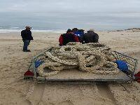 Brigada do Mar limpa as praias de quatro concelhos da região centro. 32169.jpeg
