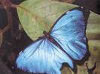 Patrimônio brasileiro no mar da Amazônia Azul