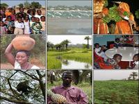 Literatura e sociedade na Guiné-Bissau