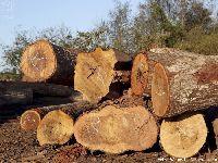 Na Amazônia, a destruição é muito maior do que conseguimos ver. 32179.jpeg