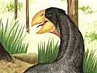 Modernas aves tiveram origem no meio aquático