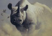 Primeiro rinoceronte nascido em cativeiro volta à Indonésia