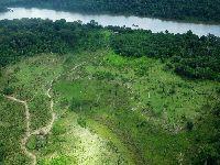 Em seis meses, 100 milhões de árvores foram derrubadas no Xingu. 29194.jpeg