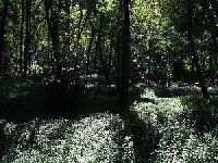 Elvas - O Anúncio de Abate de Árvores é Pronúncio de Piada de Carnaval. 28196.jpeg