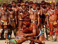 Brasil: Políticas sem consulta a povos indígenas e tradicionais. 21206.jpeg