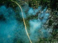Fogo, grileiros e gado ameaçam terra de indígenas isolados. 34210.jpeg